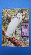 Mauritanie, Carte Maximum, Année 1967 Oiseaux N° PA 65 - Mauritanie (1960-...)