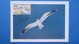 TAAF, Carte-Maximum, Année 1986,    N° PA 92 Goéland Dominicain - Tierras Australes Y Antárticas Francesas (TAAF)