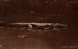 SRI LANKA. CEYLON. A MONSTER CROCODILE - Sri Lanka (Ceilán)