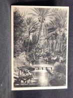 Libya Una Oasi  Tranquilla__(17482) - Libia
