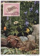 Carte-Maximum ALBANIE  N° Yvert 681 (LIEVRE) Obl Sp 1964 - Albania