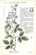 -themes Div- Ref R663- Illustrateurs - Illustrateur Fleurs - Plantes Medicinales -les Plantes Utiles - Ronce - - Plantes Médicinales