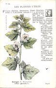 -themes Div- Ref R662- Illustrateurs - Illustrateur Fleurs - Plantes Medicinales -les Plantes Utiles - Guimauve  - - Plantes Médicinales