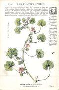 -themes Div- Ref R660- Illustrateurs - Illustrateur Fleurs - Plantes Medicinales -les Plantes Utiles - Mauve Petite  - - Plantes Médicinales