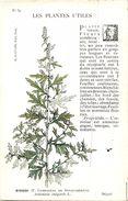 -themes Div- Ref R659- Illustrateurs - Illustrateur Fleurs - Plantes Medicinales -les Plantes Utiles - L Armoise   - - Plantes Médicinales