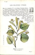-themes Div- Ref R657- Illustrateurs - Illustrateur Fleurs - Plantes Medicinales -les Plantes Utiles - Tilleul  - - Plantes Médicinales