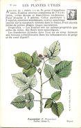 -themes Div- Ref R656- Illustrateurs - Illustrateur Fleurs - Plantes Medicinales -les Plantes Utiles - Framboisier  - - Plantes Médicinales