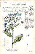 -themes Div- Ref R655- Illustrateurs - Illustrateur Fleurs - Plantes Medicinales -les Plantes Utiles - Bourrache - - Plantes Médicinales