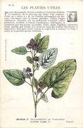 -themes Div- Ref R652- Illustrateurs - Illustrateur Fleurs - Plantes Medicinales -les Plantes Utiles - Bardane  - - Plantes Médicinales