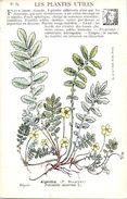 -themes Div- Ref R651- Illustrateurs - Illustrateur Fleurs - Plantes Medicinales -les Plantes Utiles - Argentine   - - Plantes Médicinales