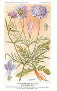 -themes Div- Ref R650- Illustrateurs - Illustrateur Fleurs - Plantes Medicinales -les Plantes Utiles -scabieuse Des Cham - Plantes Médicinales