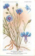 -themes Div- Ref R649- Illustrateurs - Illustrateur Fleurs - Plantes Medicinales -les Plantes Utiles- Centauree Bleuet - Plantes Médicinales