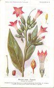 -themes Div- Ref R647- Illustrateurs - Illustrateur Fleurs - Plantes Medicinales -les Plantes Utiles-nicotiane Tabac - Plantes Médicinales