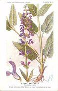 -themes Div- Ref R646- Illustrateurs - Illustrateur Fleurs - Plantes Medicinales -les Plantes Utiles- Sauge Des Pres - - Plantes Médicinales
