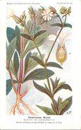 -themes Div- Ref R645- Illustrateurs - Illustrateur Fleurs Frantz - Plantes Medicinales - Compagnon Blanc - - Plantes Médicinales