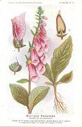 -themes Div- Ref R642- Illustrateurs - Illustrateur Fleurs Frantz - Plantes Medicinales - Digitale Pourprée  - - Medicinal Plants
