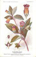 -themes Div- Ref R641- Illustrateurs - Illustrateur Fleurs Frantz - Plantes Medicinales - Atropa Belladone  - - Medicinal Plants