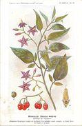 -themes Div- Ref R640- Illustrateurs - Illustrateur Fleurs Frantz - Plantes Medicinales - Morelle Douce Amere   - - Plantes Médicinales