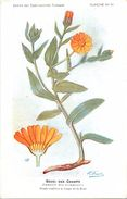 -themes Div- Ref R639- Illustrateurs - Illustrateur Fleurs Frantz - Plantes Medicinales - Souci Des Champs   - - Plantes Médicinales