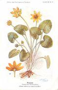 -themes Div- Ref R635- Illustrateurs - Illustrateur Fleurs Frantz - Plantes Medicinales - Ficaire - - Plantes Médicinales