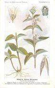 -themes Div- Ref R631- Illustrateurs - Illustrateur Fleurs Frantz - Plantes Medicinales - Dompte Venin Officinal - - Plantes Médicinales