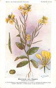 -themes Div- Ref R628- Illustrateurs - Illustrateur Fleurs Frantz - Plantes Medicinales - Moutarde Des Champs - - Plantes Médicinales