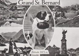 CPSM. Grand St. Bernard. Multivue Noir Et Blanc - VS Valais