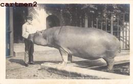 CARTE PHOTO : BERN ? HIPPOPOTAMUS AMPHIBIUS HIPPOPOTAME ZOO JARDIN ZOOLOGIQUE BERNE SUISSE - BE Bern