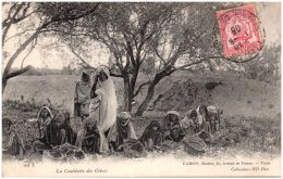 TUNISIE - La Cueillette Des Olives    (Recto/Verso) - Tunesië