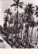 CEYLAN SYMPHONIE DE COCOTIERS  (dil299) - Sri Lanka (Ceylon)