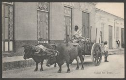 Cuban Ox Team, Havana, Cuba, C.1910 - Harris Bros Postcard - Cuba