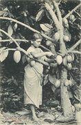 "CEYLAN - SRI LANKA - JEUNE FEMME - "" RECOLTE DU CACAO"" - CARTE EN TRES BON ETAT. - Sri Lanka (Ceylon)"