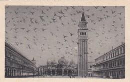 Italy Venezia Piazza San Marco Volata di Piccioni