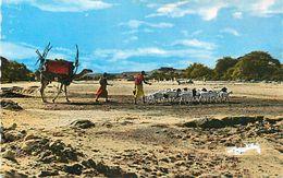 PIE-17-P.VA 3771  : VISAGE DU PAYS SOMAL. ANCIENNE TERRE DE PUNT CARAVANE - Somalie