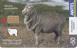 Nº 441 TARJETA RAZAS OVINAS MERINO AUSTRALIANO - Uruguay