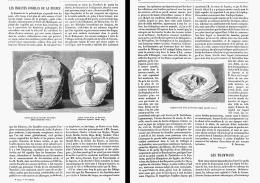 LES INSECTES FOSSILES DE LA FRANCE   1874 - Fossils