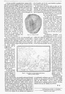 LE MUSC    1875 - Parfums & Beauté