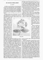 LE BOLDO    1875 - Santé