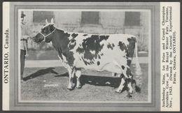 Auchenbay Mina, Grand Champion Ayrshire Cow, Royal Winter Fair, Toronto, 1923 - Strohmeyer Postcard - Cows