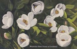 Louisiana State Flower The Magnolia Curteich