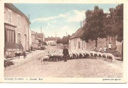 BINGES - Grande Rue ( Troupeau De Mouton ) - Autres Communes