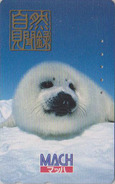 Télécarte Japon / 110-011 - ANIMAL - BEBE PHOQUE BLANCHON -  YOUNG FUR SEAL Japan Phonecard - HEULER - 269 - Japon