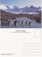 South Georgia King Penguins At St. Andrew's Bay Postcard Unused (33344) - Falkland Islands