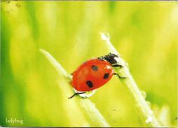 Ladybird Beetle (Coccinelle), Carte Postale BELARUS  Adressée Andorra, Bel Affranchissement, Avec Timbre à Date Arrivée - Belarus