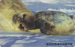 Télécarte Japon / 221-492 - ANIMAL - PHOQUE - SEAL Animals Japan Phonecard - ROBBE Tiere Telefonkarte -  302 - Tarjetas Telefónicas