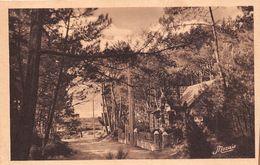 ¤¤  -   47   -  QUIMIAC-en-MESQUER  -  Avenue Ombragée Dans Le Bois De Pins  -  ¤¤ - Mesquer Quimiac