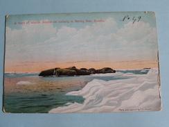 A Herd Of WALRUS Asleep On Iceberg In BERING SEA Alaska (written On Front) Anno 19?? ( Zie Foto´s Voor Detail ) ! - Etats-Unis