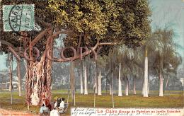 Egypte Egypt - Le Caire Cairo - Groupe De Palmiers Au Jardin Esbekieh - El Cairo