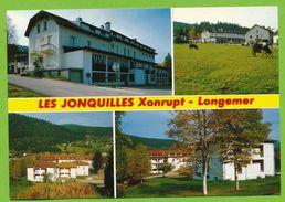 XONRUPT-LONGEMER - LES JONQUILLES - Xonrupt Longemer