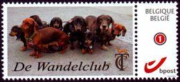 Belgie Belgium Belgien - Teckel Dackel - De Wandelclub TCC - België
